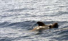 Familienausflug der Wale
