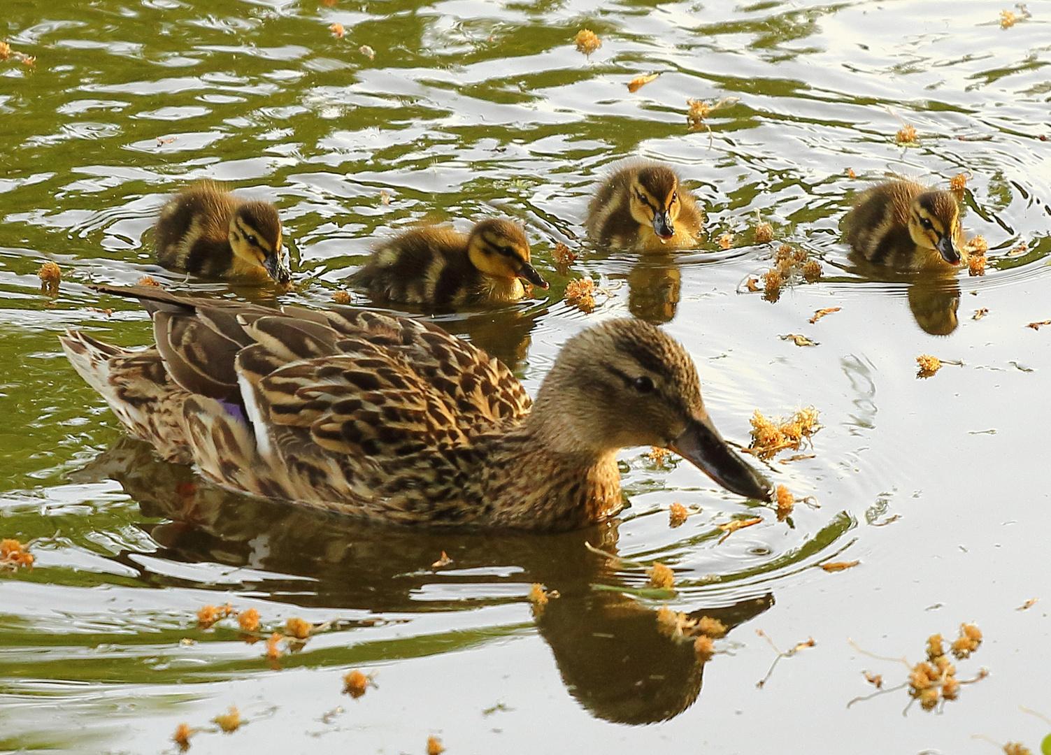 Familienausflug im Schweriner Schloßpark