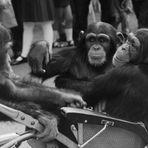 Familienausflug im Zoo