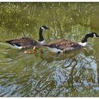Familienausflug ins Wasser