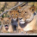 Familienfoto ...
