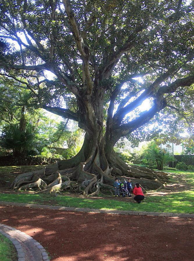 Familienfoto mit Baum