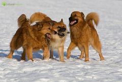 Familienteam