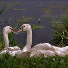 Family love ..