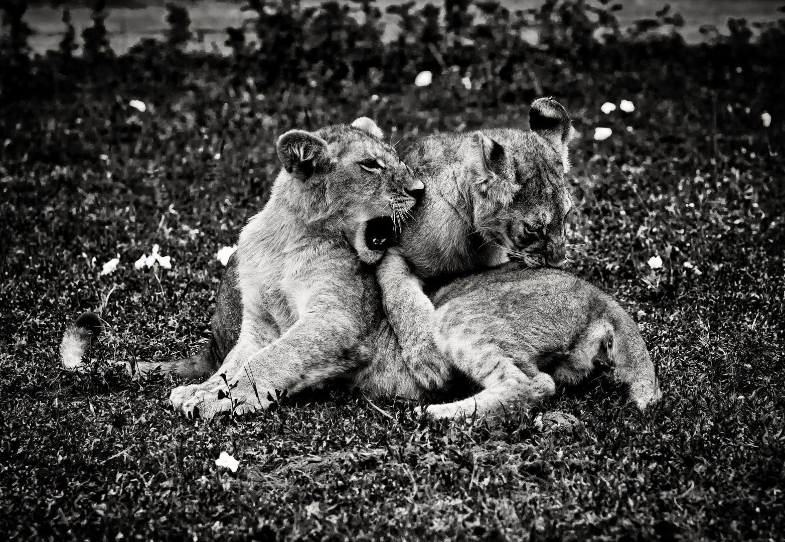 Family play, Tanzania
