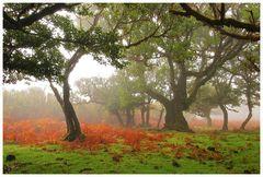 Fanal im Nebel