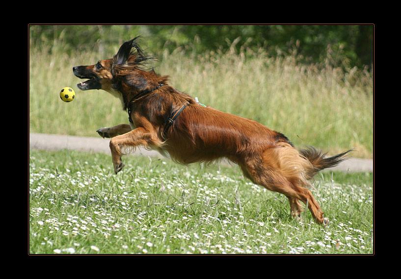 Fang den Ball, Sina!