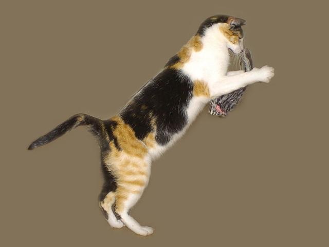 Fang Die Maus Foto Bild Tiere Haustiere Katzen Bilder Auf