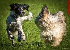 Fangen in der Hundeschule