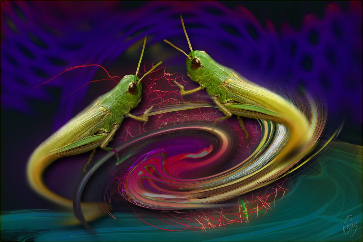 fantaisie-entomologique N°2