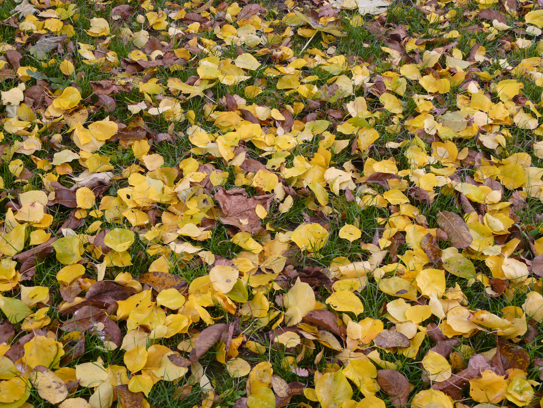 fantasia d'autunno