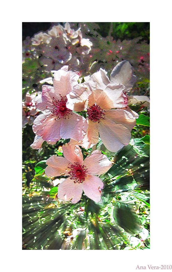 Fantasía para una flor alegre..