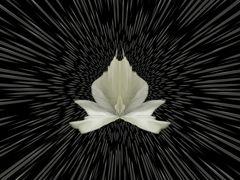 fantasie Blume
