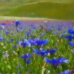 Fantasie di primavera.