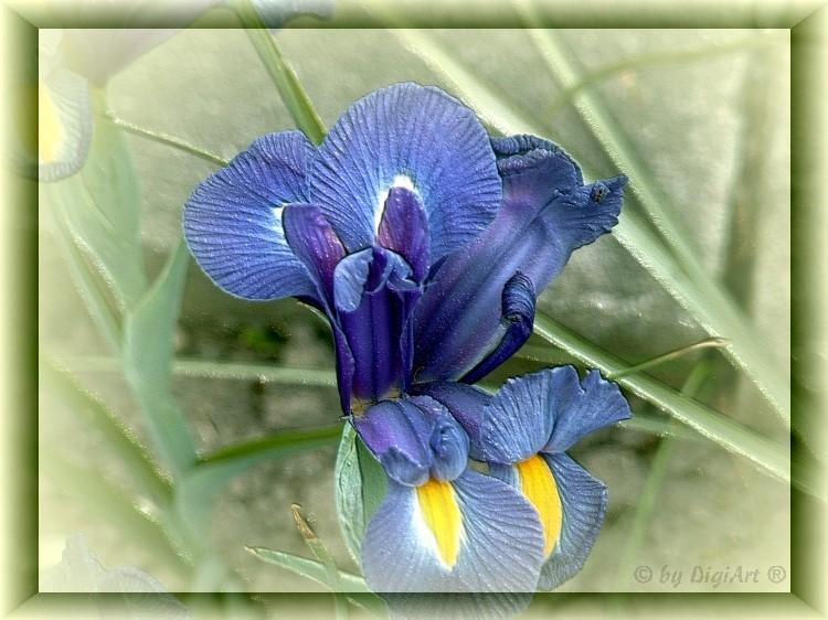 Fantasie in Blau II
