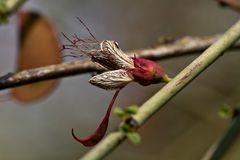 Fantastische Blüte eines Baums auf Hauchabfontein