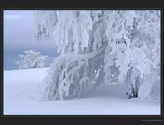 Fantastische Frostskulpturen