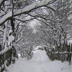 """fantasy path"""