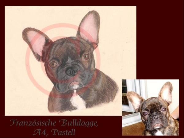 Fanzösische Bulldogge