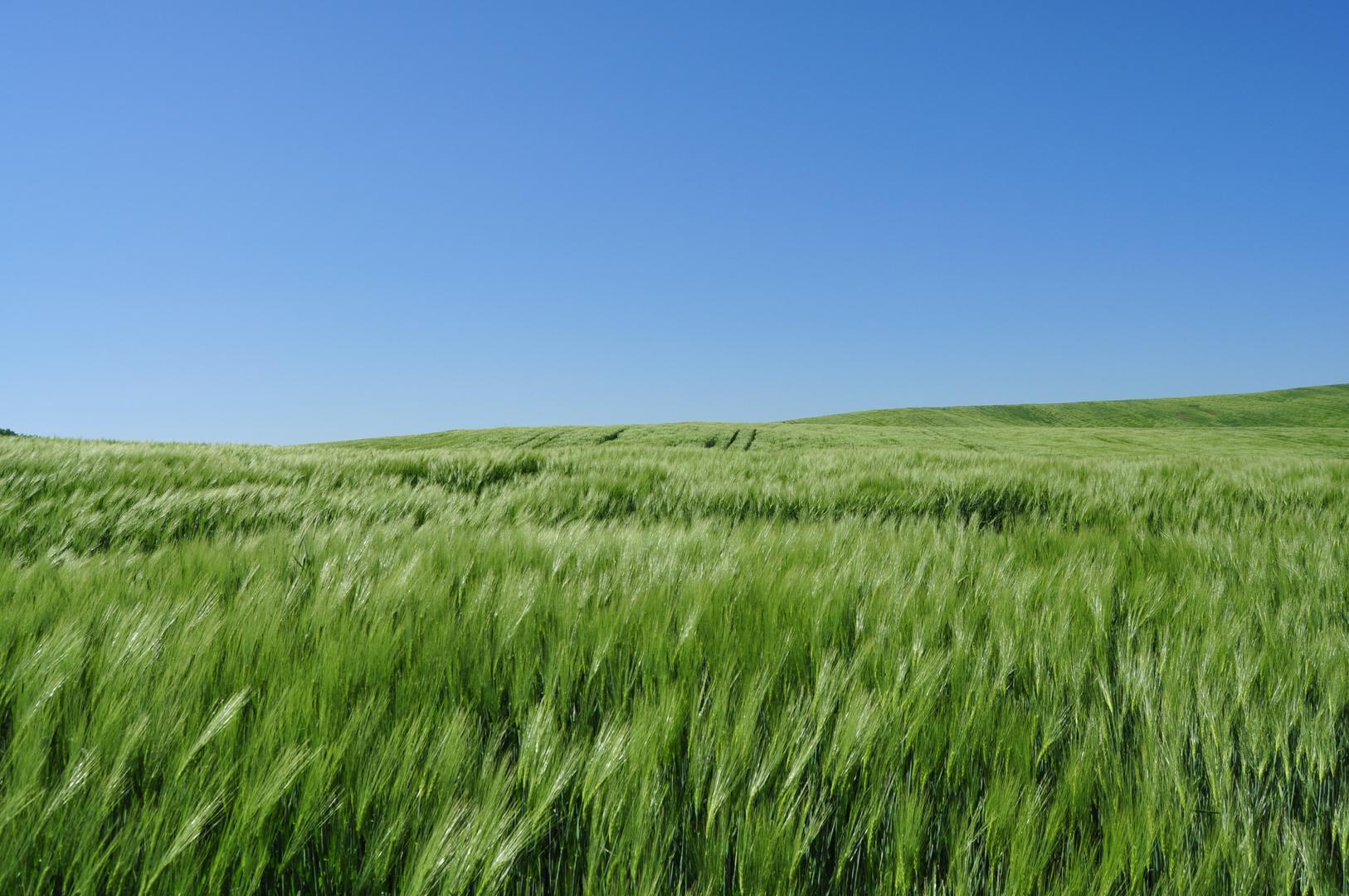 Far in windy field