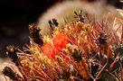 Farb-Explosion im Sonnenlicht von Kurt Sigrist