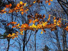 ...Farbe des Herbstes...