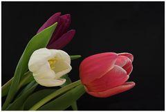 Farbe, Frühling (2)