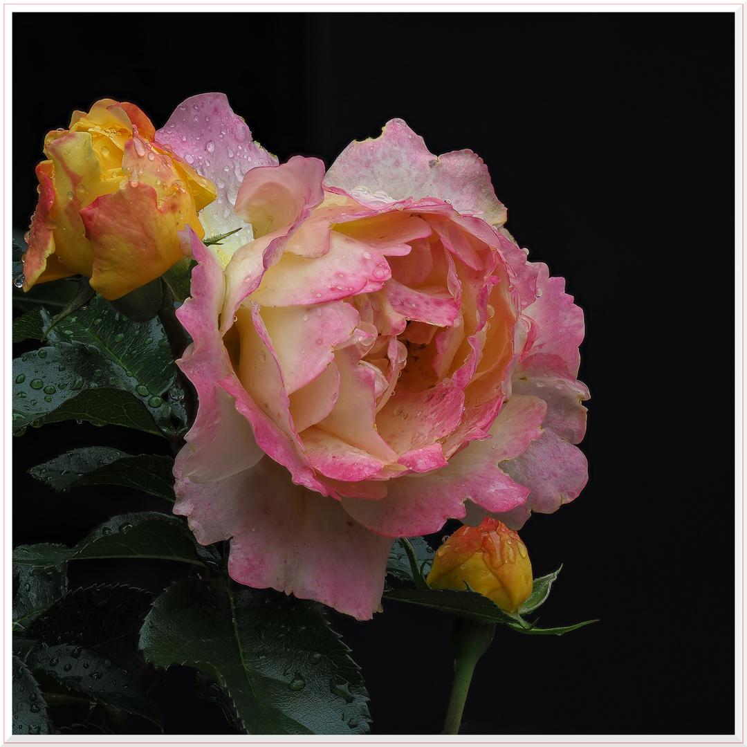 2cdf562ff2 Farbe gegen den Regen! Foto & Bild | pflanzen, pilze & flechten ...