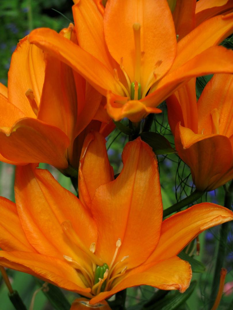 322634fb32 Farbe gegen Regen Foto & Bild | blumen, orange, natur Bilder auf ...