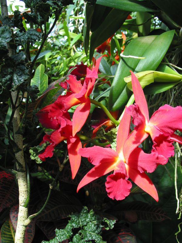 farbe im dschungel foto bild pflanzen pilze flechten bl ten kleinpflanzen orchideen. Black Bedroom Furniture Sets. Home Design Ideas
