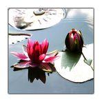 Farbe im Wasserspiegel