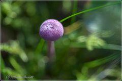 Farbe und Licht im Wald