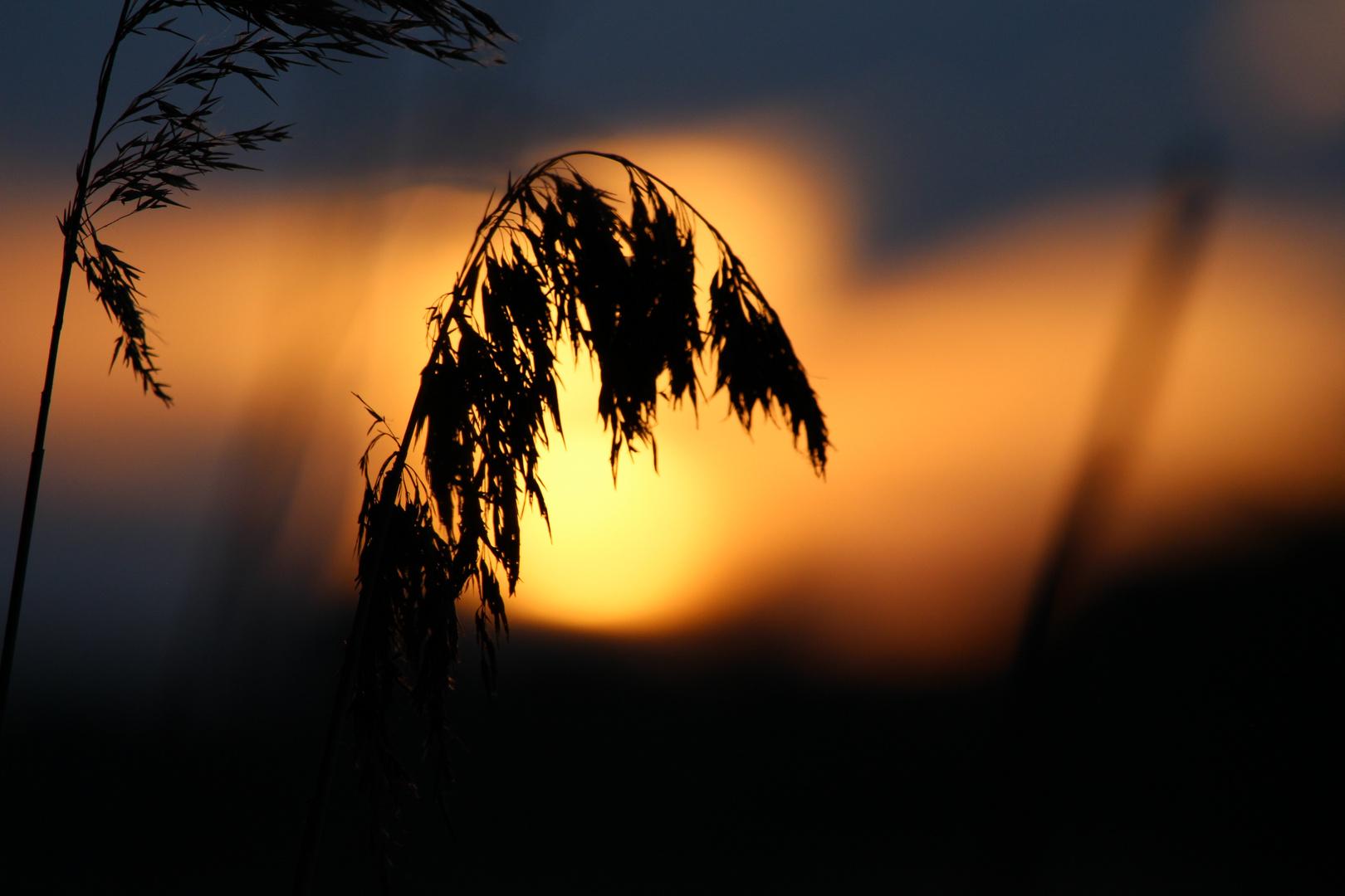 Farben am Morgen