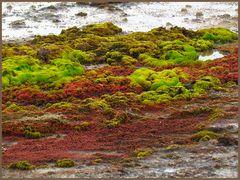 Farben der Arktis 2
