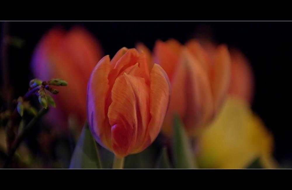Farben des Frühling