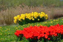 Farben des Frühlings I