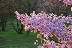 Farben des Frühlings II