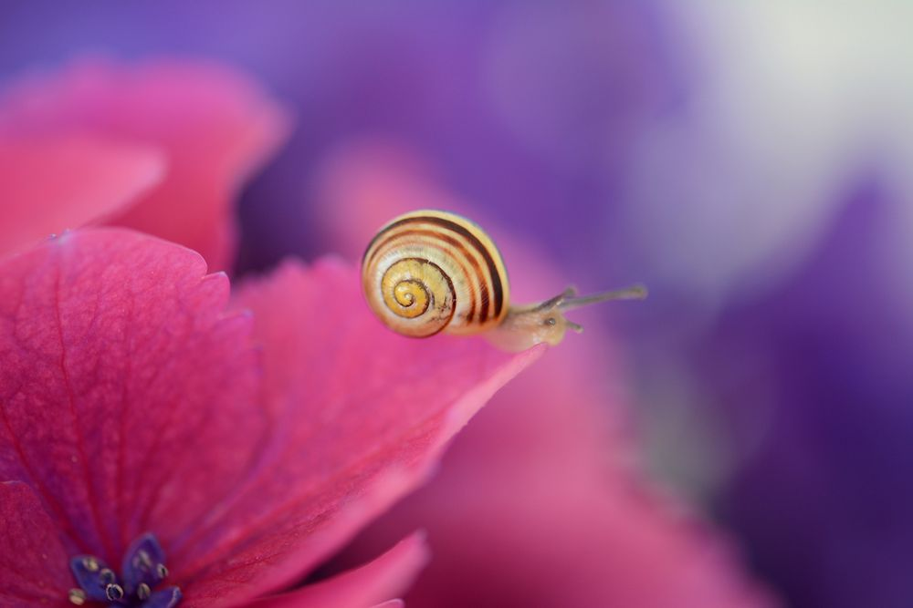 Farben des Glücks...