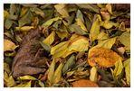 Farben des Herbst 2