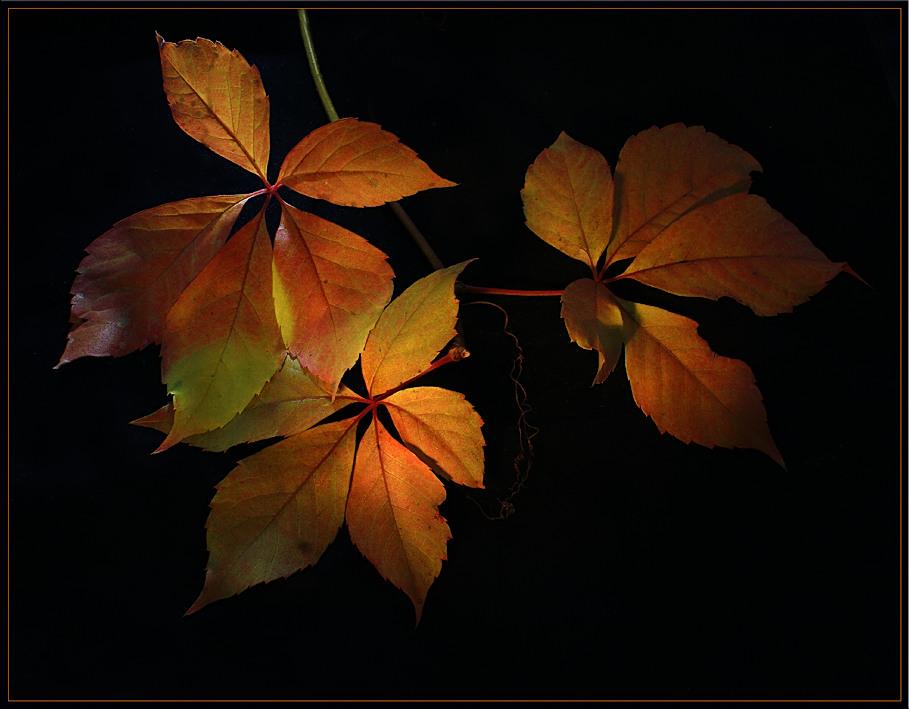 Farben des Herbstes 3