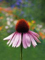 Farben des Sommers...