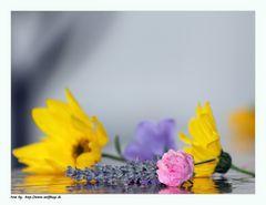 Farben des vergehenden Sommers.....