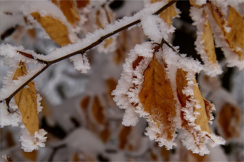 Farben des Winters