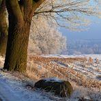 . farben eines wintermorgens .