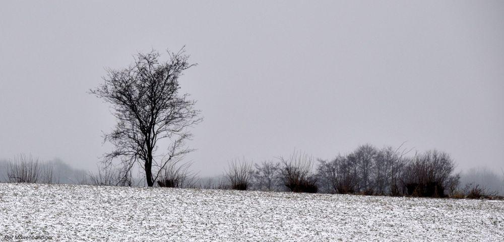 Farben eines Wintersonntages