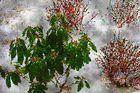 Farben für den Schnee