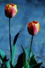 Farben im April