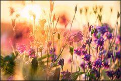 Farben im Frühling