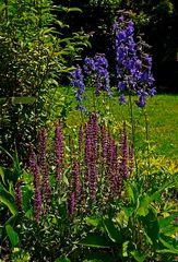 Farben im Garten ...