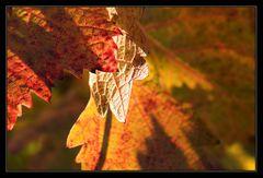 Farben im Herbstlicht